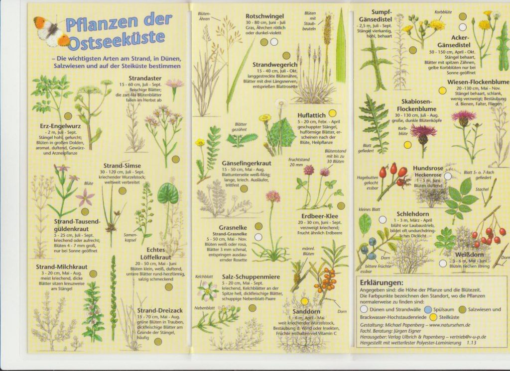 """Faltblatt """"Pflanzen der Ostseeküste"""""""